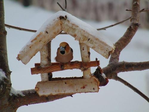 Птичку жалко. Зимующие пернатые особенно нуждаются в помощи человека