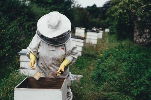 В добрый путь! У кунашакских пчеловодов – планов громадьё