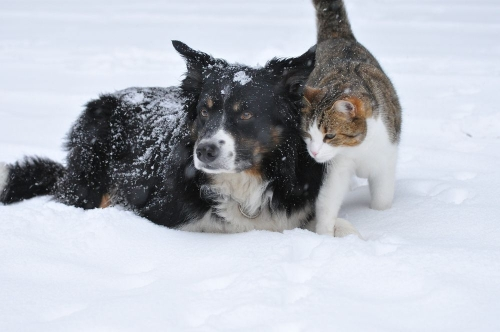 В защиту братьев меньших. Южноуральские парламентарии предлагают внести поправки в закон о содержании домашних животных
